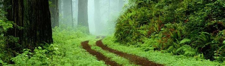 蚂蚁森林树长大图片